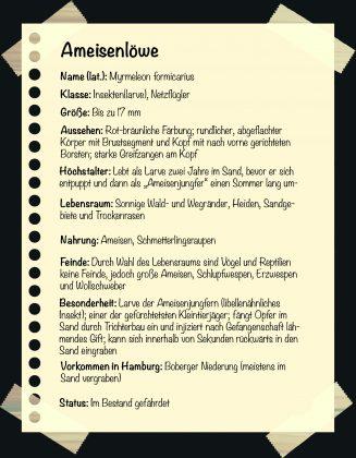 Seltene Tiere in Hamburg. Steckbrief: Ameisenlöwe. Grafik: Sarah Kneipp.