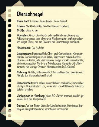 Seltene Tiere in Hamburg: Steckbrief: Bierschnegel. Grafik: Sarah Kneipp.