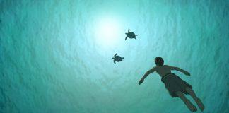 """Szene aus dem Animationsfilm """"Die rote Schildkröte"""""""