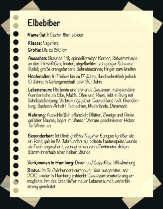 Seltene Tiere in Hamburg. Steckbrief: Elbebiber. Grafik: Sarah Kneipp.