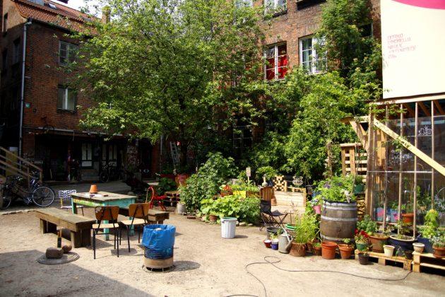 Urban Gardening im Gängeviertel. Foto: Lesley-Ann Jahn