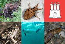 Seltene Tiere in Hamburg: Eine Collage aus Elbebiber, Ameisenlöwe, Knoblauchkröte, Schweinswal und Bierschnegel sowie Hamburg Logo
