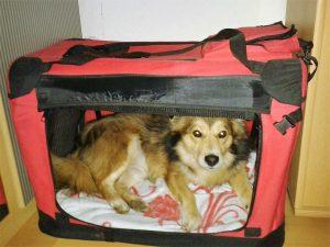 Urlaub mit Hund Transportbox