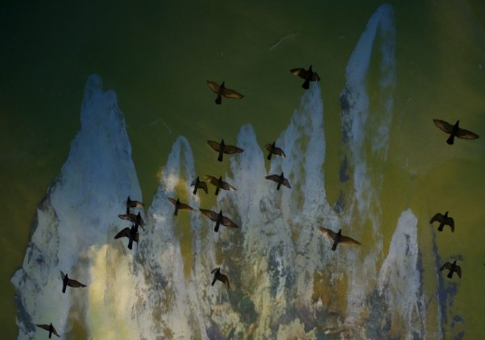 Vögel, die in den Himmel aufsteigen