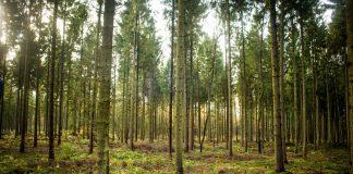 Ein Tag im Wald. Foto: Paul Spethmann