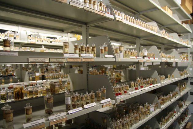 Die-Sammlung-Wirbellose-Tiere-I-im-CeNak