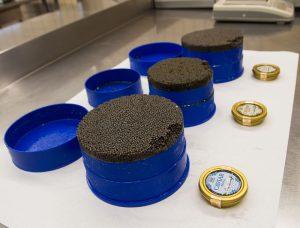 Kaviar aus der Dose