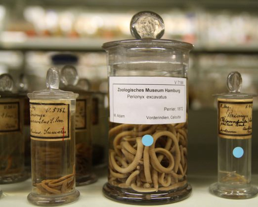 Regenwürmer im Glas