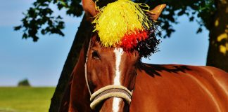 Deutsche Pferde sind sichtlich begeistert von der WM.