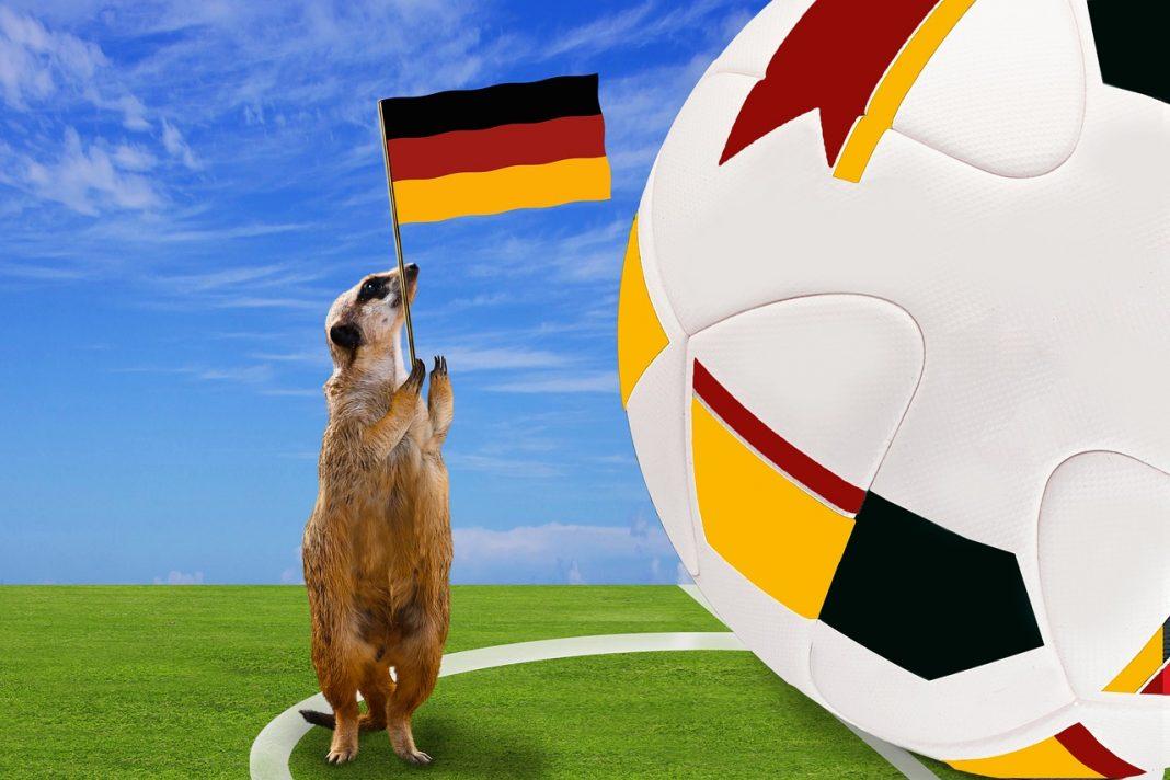 WM-Alternativen für Erdmännchen.