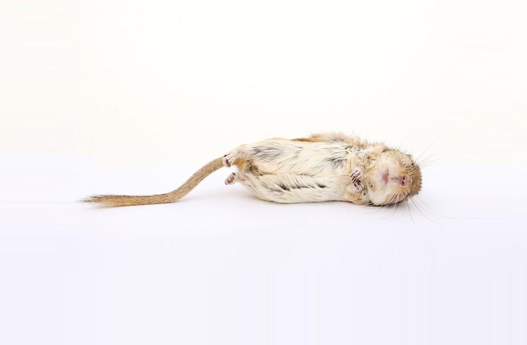 Nach wie vor jedoch sind die Argumente gegen Tierversuche im medizinischen Bereich nicht überzeugend.