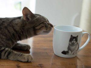 Katze im Katzentempel