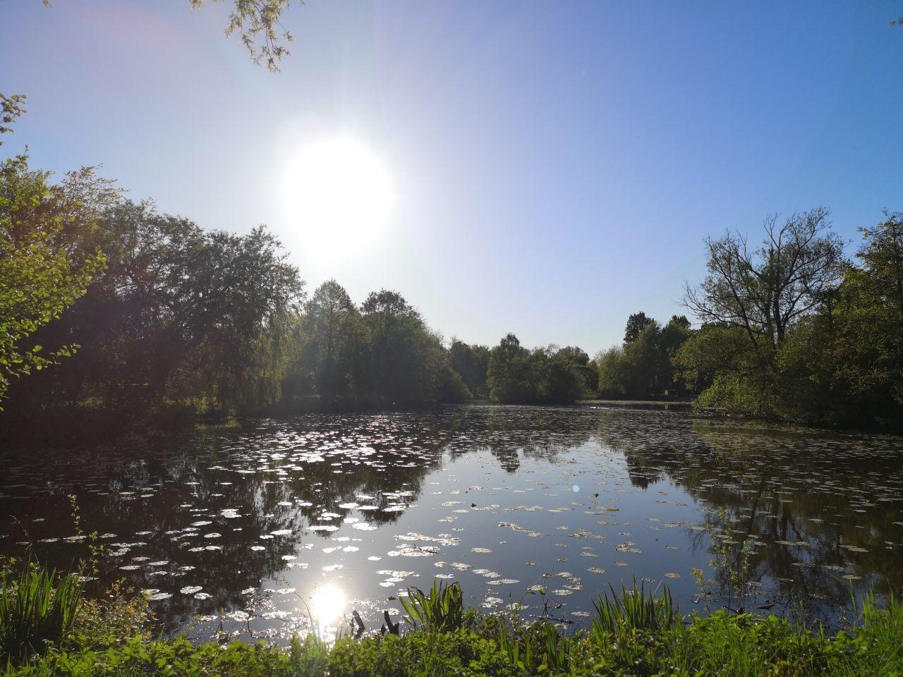 Einer der Seen im Inselpark in Wilhelmsburg. Foto: Thoya Urbach