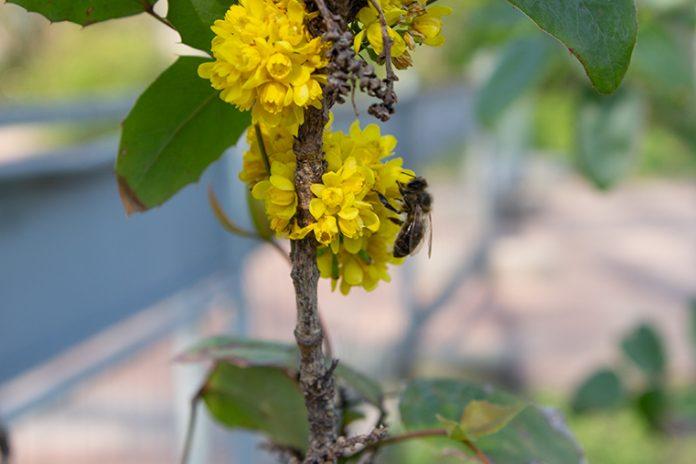 Biene sitzt auf einer Blüte.