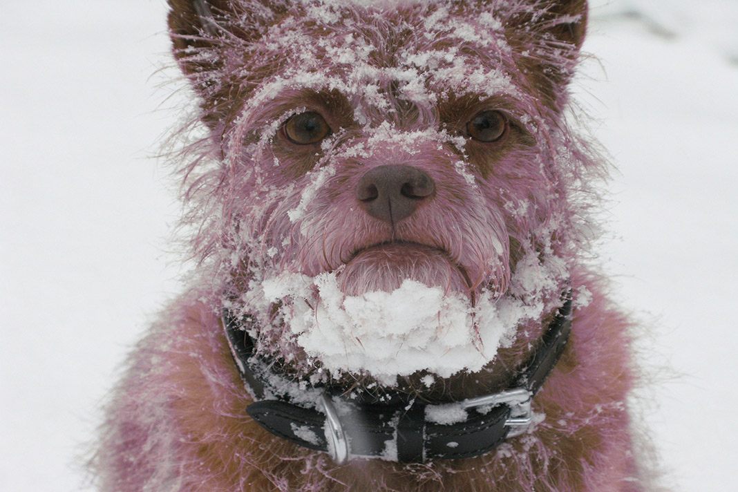 Hund im Schnee.