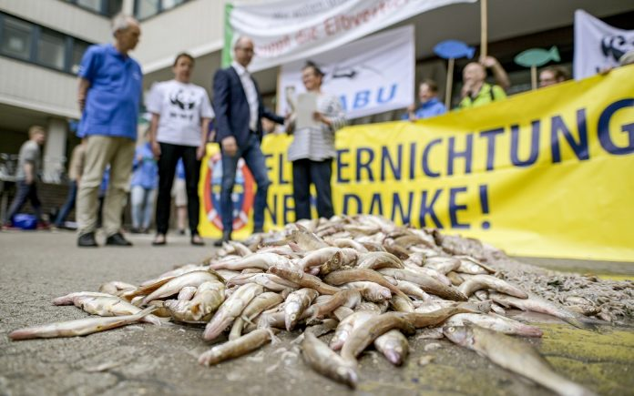 Tote Fisch liegt auf der Straße, dahinter protestieren Umweltaktivisten gegen die Elbvertiefungsarbeiten.