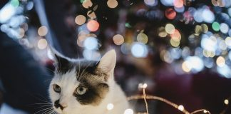 Katze als Geschenk unter dem Weihnachtsbaum.