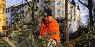 Mann von der Stadtreinigung Hamburg sammelt ausgedienten Weihnachtsbaum ein.