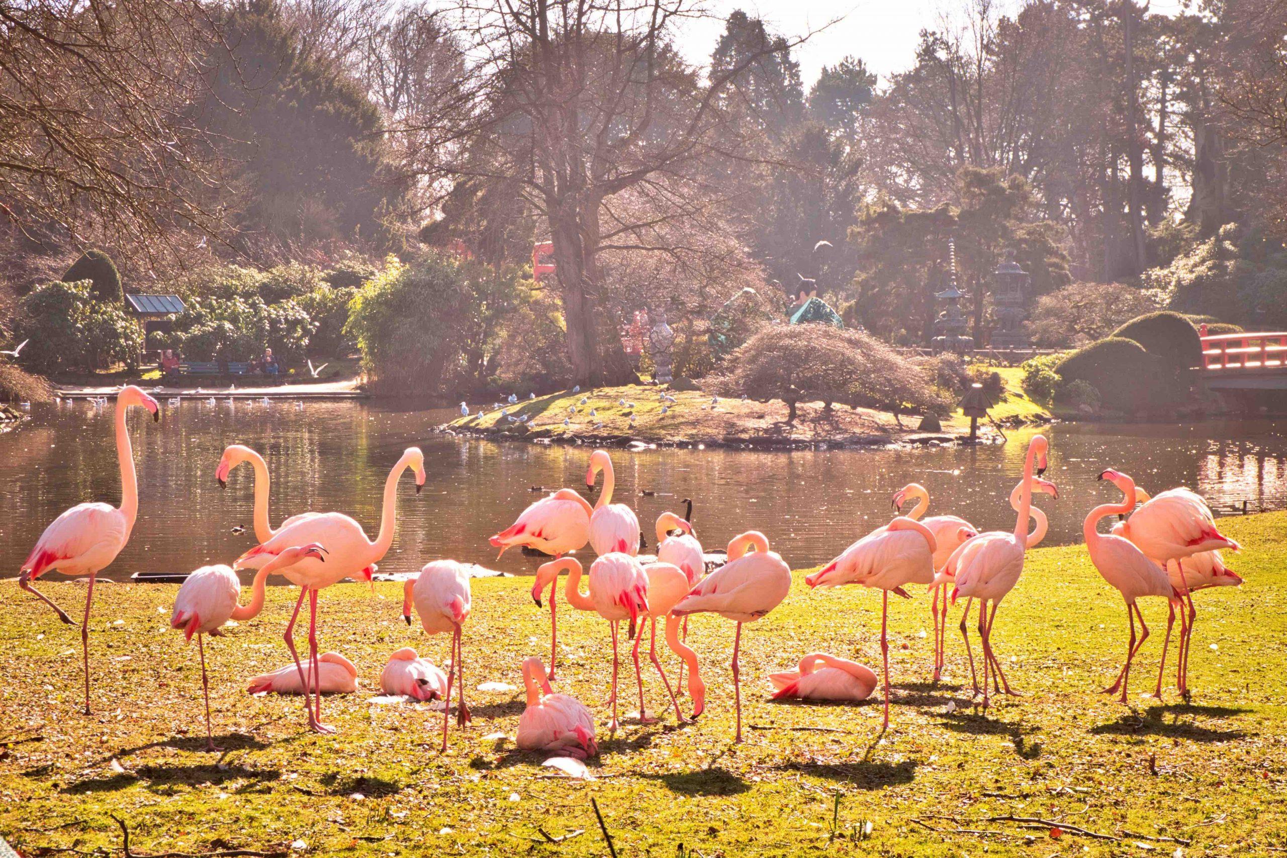 Tierpark Hagenbeck Flamingos