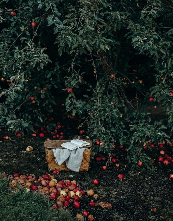 Apfelhof an der Elbe, Apfelbaum mit Korb