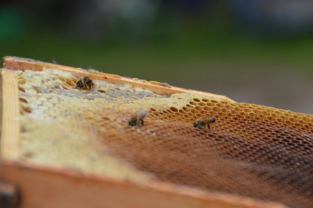 Bienen laufen über Honigwaben
