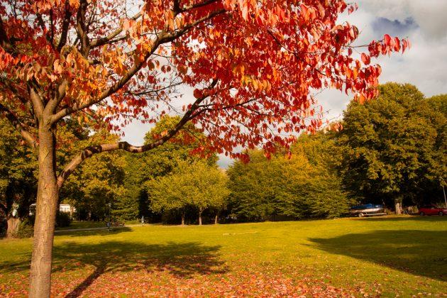 Herbst_in_Eilbek