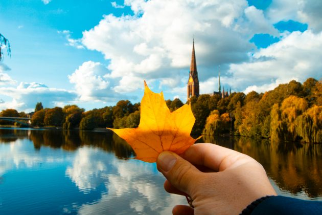 Buntes_Herbstlaub