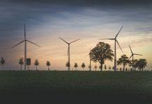 Windräder zwischen Bäumen auf Feld