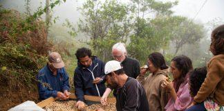 Kaffee Nachhaltigkeit Mexiko Plantage