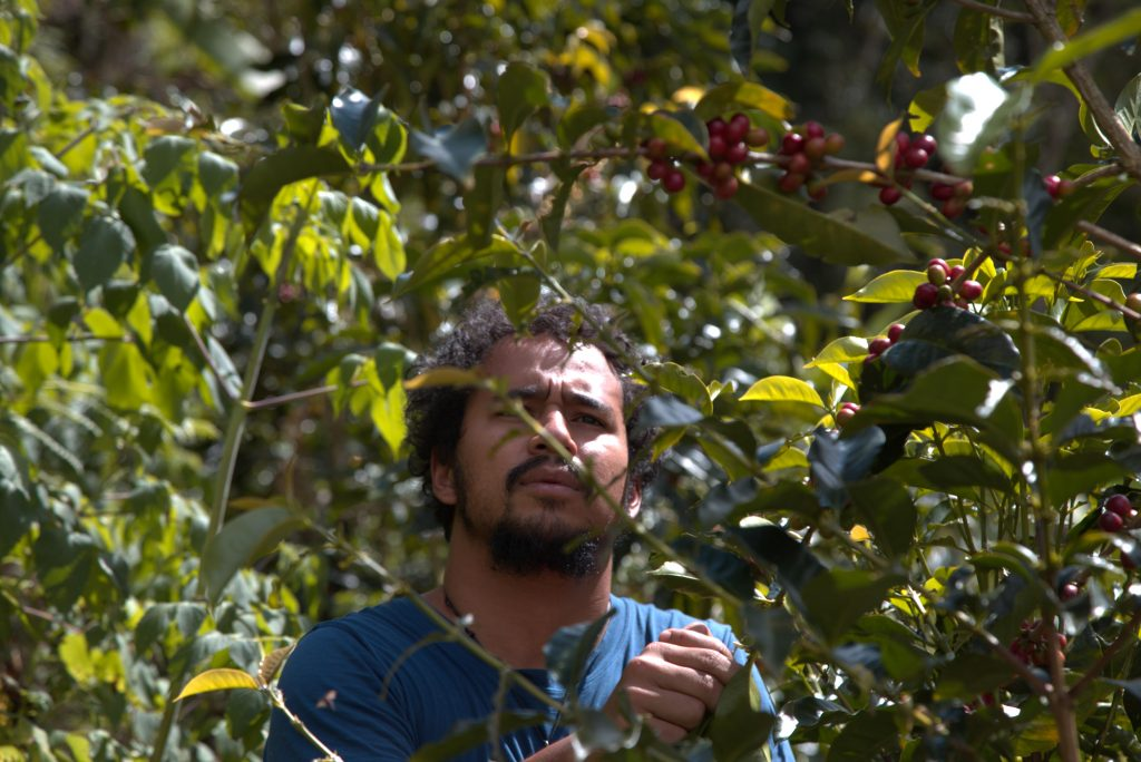 Kaffee Ernte Mexiko Plantage