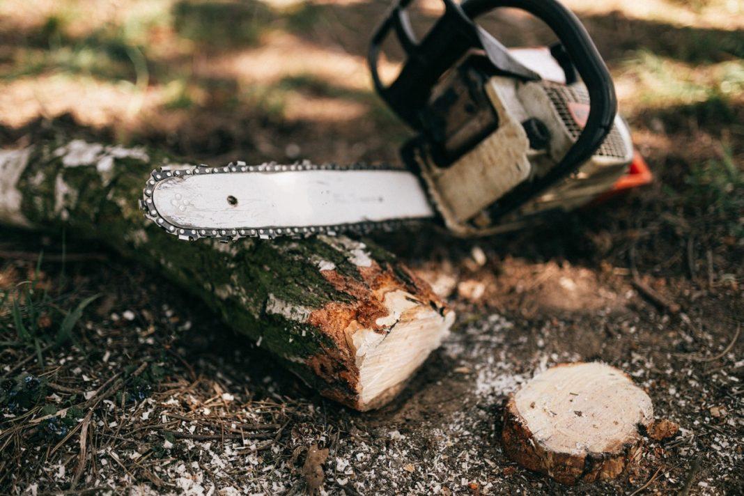 Kettensäge liegt im Wald auf Boden