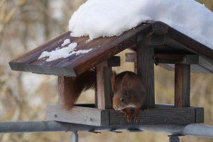Vögel füttern und Eichhönrchen eine Freude bereiten mit einem Futterhaus.
