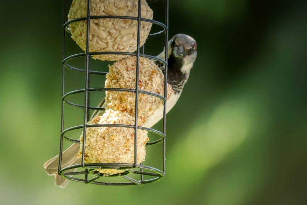 Vögel füttern: Im Winter überlebenswichtig für die Tiere.
