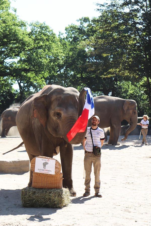 Elefantendame zieht die Frankreichflagge.
