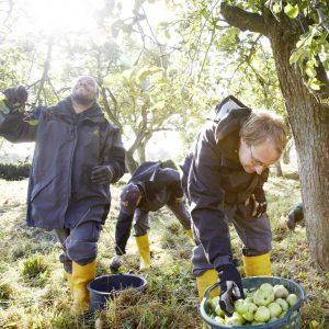 Mirarbeiter:innen von Das Geld hängt an den Bäumen pflücken Obst