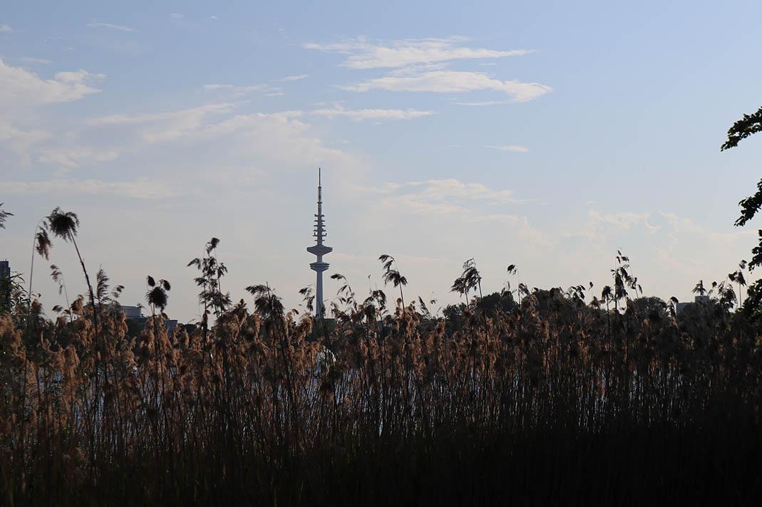 Hamburg bleibt Grün, Stadtgrün