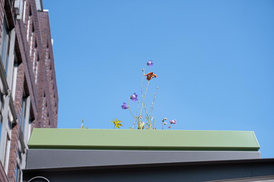 Bee Stops: Fahrgastunterstand am Axel-Springer-Platz in Hamburg. Auf dem Dach ist eine Weildblumenwiese zu sehen.